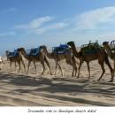 Genipabu Beach and Dunes Natal Brazil