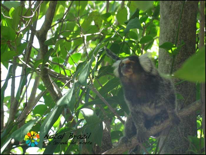 pipa-brazil-monkey