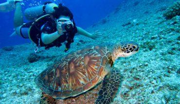 Natal Brazil Diving