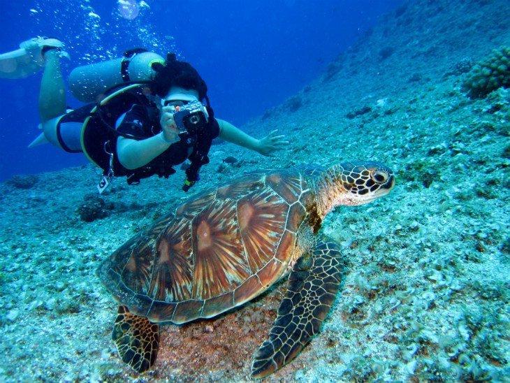 green-turtle-projeto-tamar