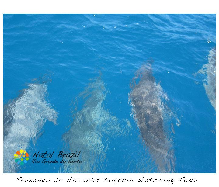 fernando-de-noronha-dolphin-watching