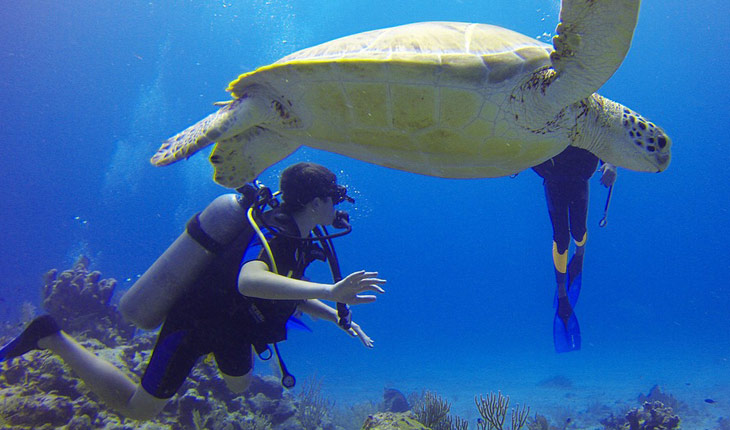 Fernando de Noronha Diving and Snorkeling