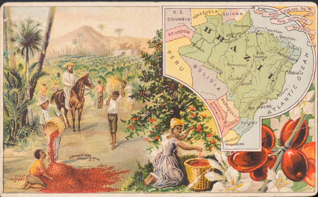 coffee-cultivation-brazil