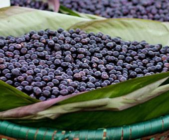 acai-fruit-brazil