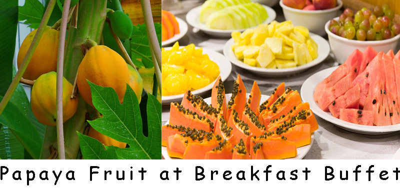 papaya-fruit-brazil-breakfast
